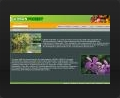 Web design and web development thumbnail of Urban Forest Web Site (v1)